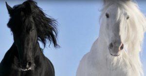 horse-300x156